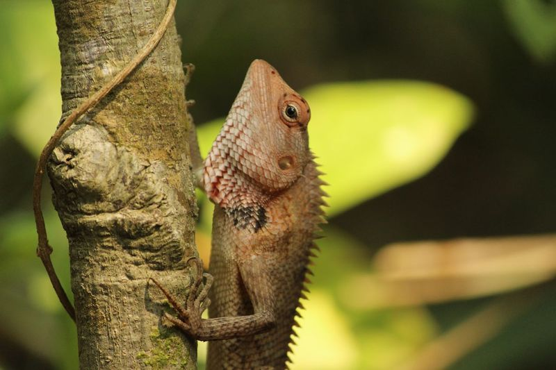 Garden lizard Animal Themes Animal One Animal Reptile Vertebrate Animal Wildlife Animals In The Wild Lizard No People Focus On Foreground Close-up Bearded Dragon Nature Tree Day Outdoors Branch Green Color Plant Animal Body Part