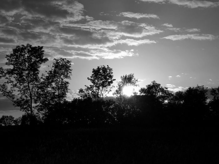 Black & White Evening Light Sunlight Beauty In Nature Blackandwhite Cloud - Sky Evening Atmosphere Evening Sun Field Growth Horizon Monochrome monochrome photography Nature Outdoors Scenics - Nature Silhouette Sunset Tranquil Scene Tranquility Tree