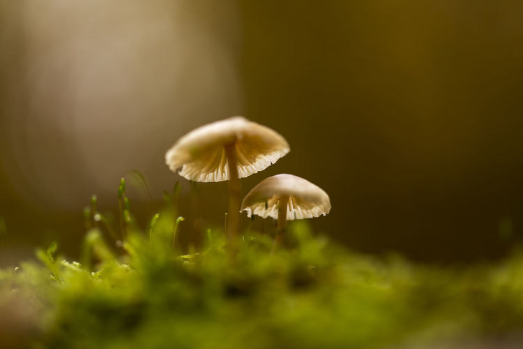 Small World 2 Beauty In Nature Brown Backside Close-up Day EyeEm Best Shots Forest Forest Photography Fragility Fungus Green Light Light And Shadow Lookingup Macro Macro Photography Moss Mushroom Nature Nature Photography Nature_collection No People