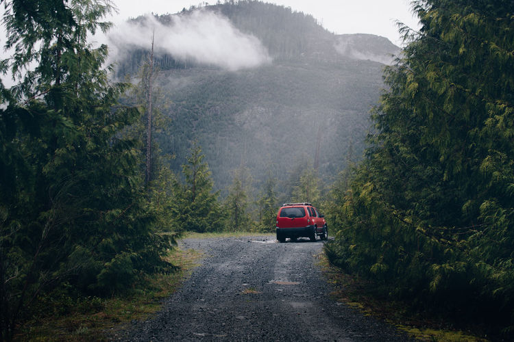 Car on road in forest