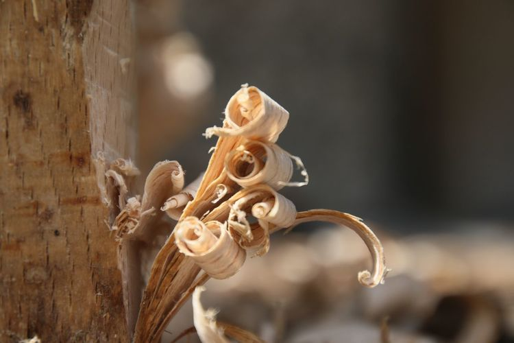 Close-Up Of Wood Shavings