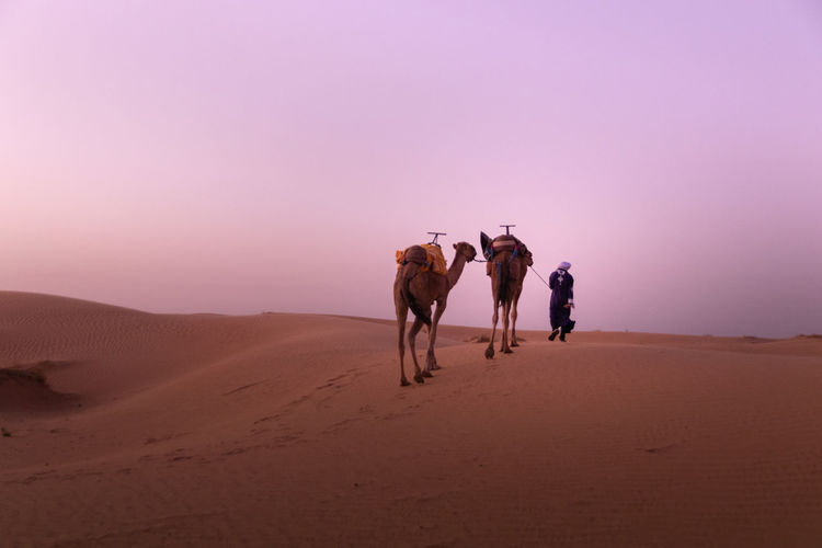 Rear view of man walking with camel on sand
