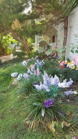 Flawors Urban Gardening