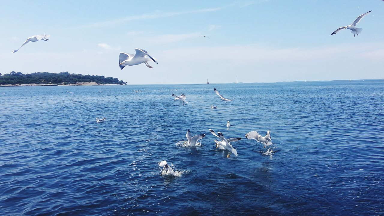 flying, animals in the wild, animal themes, bird, mid-air, sea, spread wings, animal wildlife, nature, large group of animals, seagull, beauty in nature, water, flock of birds, motion, day, jumping, sky, no people, outdoors, scenics, horizon over water, pelican, sea life, swimming, swan, mammal