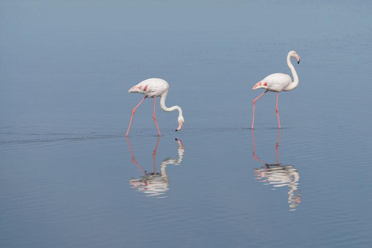 Flamingos in a lake