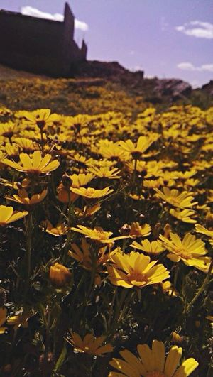 Spring Flowers Yallow 🌼🍂