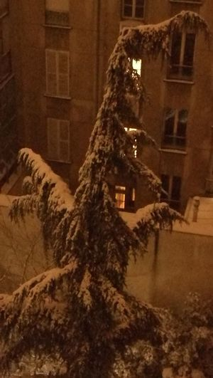 Ice age 2018 Snow ❄ Paris Snow Scene Nightphotography Dinosaure Architecture No People Building Exterior History Built Structure Travel Destinations Outdoors Winter Tree