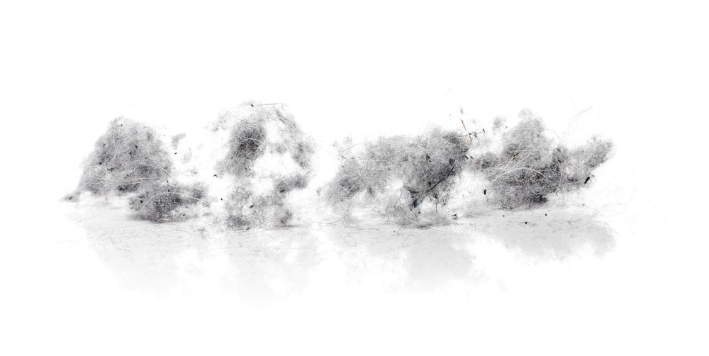 Dust bunnies on white reflecting background Club CutOut Dust Dust Bunnies Dust Bunny Dustbunnies Dustbunny Dusty Fluffy Gray Green Color Isola No People Nobody Object Reflectuon Studio Shot Unhygienic White Background