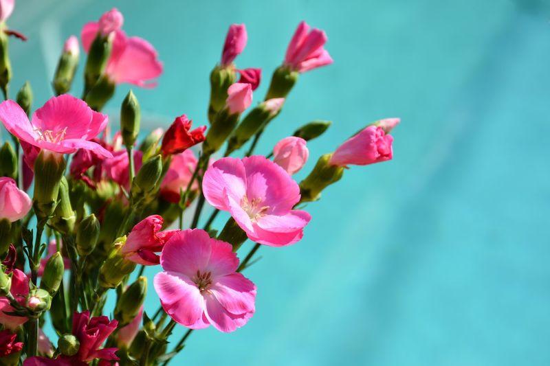 Hot pink floral EyeEm Selects Flora Floral Flowers Pink Flowers Bright Colors Flower Head Flower Pink Color Petal Close-up Plant Magenta Blossom Botany