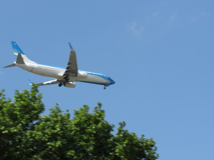 Landing Air Vehicle Blue Sky Airplane Transportation Low Angle View Mode Of Transportation Clear Sky Flying Travel Nature Tree Copy Space No People Motion Journey Day Plant Mid-air Outdoors