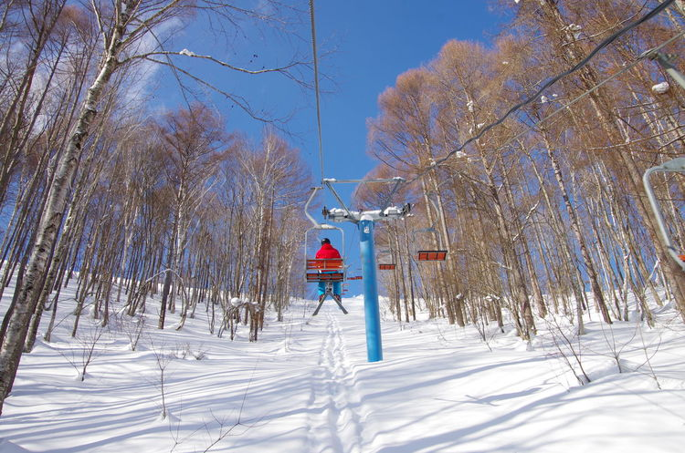 Beauty In Nature Cold Temperature Gunma Gunma Japan Japan Nature Outdoors Sky Snow Tree Winter Winter Sport