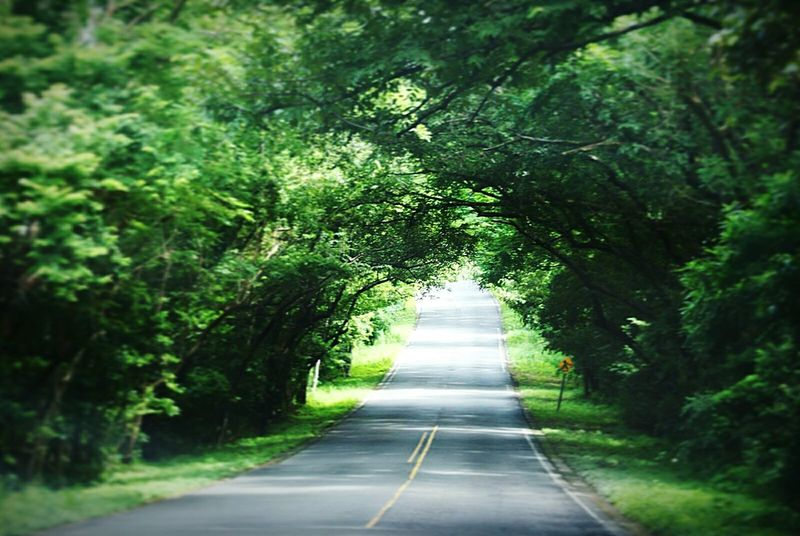 road The Way Forward Nature Road Tree Day Outdoors Green Color Forest Beauty In Nature No People