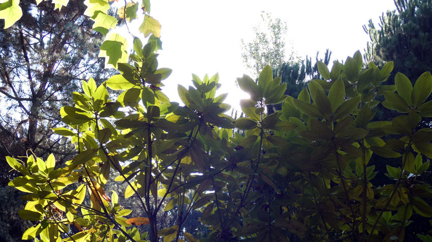 Parque da Cidade - Porto Nature Sunlight Beauty In Nature Branch Clear Sky Close-up Day Effect Flower Freshness Green Color Growth Leaf Low Angle View Nature Nature_collection No People Outdoors Plant Plant Part Sky Spring Sunlight Tranquility Tree