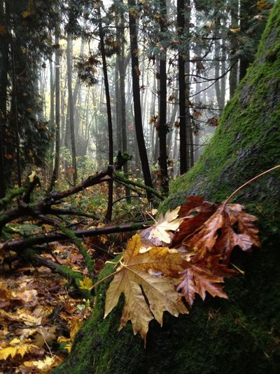 November gloom in the forest.