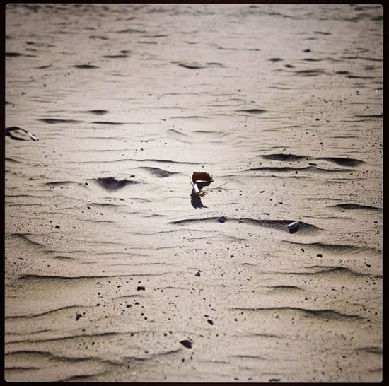 In every grain of sand there is a story of the earth ~ Rachel Carson Sand Beach Wanderlust Travel Photography Capturing Freedom Nature Hello World California Traveling Sound Of Life