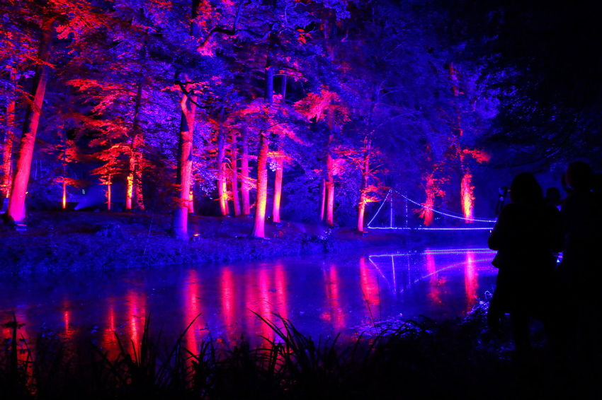 Beauty In Nature Dark Dark Darkness And Light EyeEm Gallery EyeEm Illuminated EyeEm Nature Lover Illuminated Learn & Shoot: After Dark Lichtspiele Light Night Nightphotography Outdoors Poesie Des Lichts Reflection Schloss Dyck Tranquil Scene Tranquility Tree TreePorn Vibrant Color Water Reflections