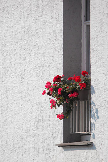 Flowers by the Windowsill City City Life Cityscape EyeEm Nature Lover Nature Nature Photography Urban Geometry Architecture Beauty In Nature Building Building Exterior Built Structure Day Flower Flowering Plant Fragility Freshness Growth House Nature Nature_collection Neighborhood No People Plant Urban