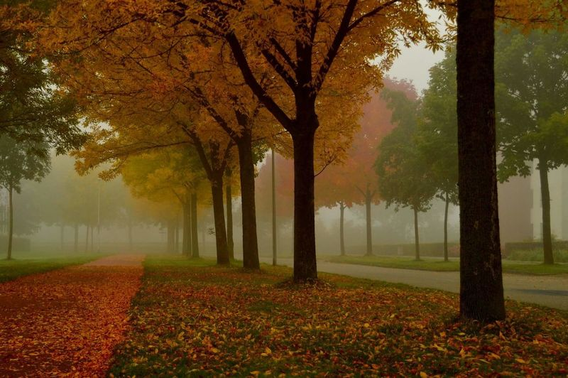 Holland Autumn Autumn Colors Leaves Trees Red Orange Green Yellow Early Morning Foggy Foggy Morning September