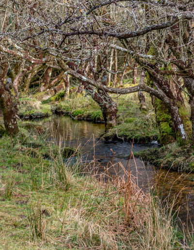 Water Nature Tree Beauty In Nature Growth No People Tranquility Outdoors Day Scenics Forest Grass Landscape Tranquil Scene