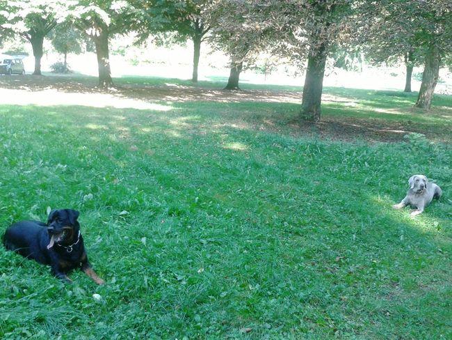 Freya und Phil Hunderunde Unterwegsunddraußen Hundefreundschaft Dogs Mydog Grassland Park