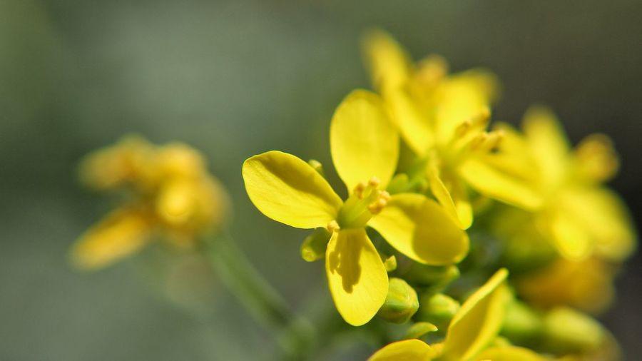3mm Flower