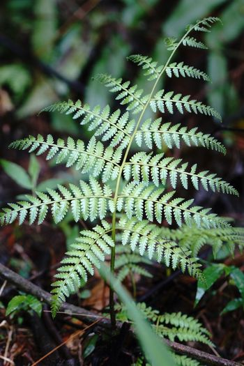 A new life Growth Plant Leaf Nature Day No People Close-up Beauty In Nature Fern