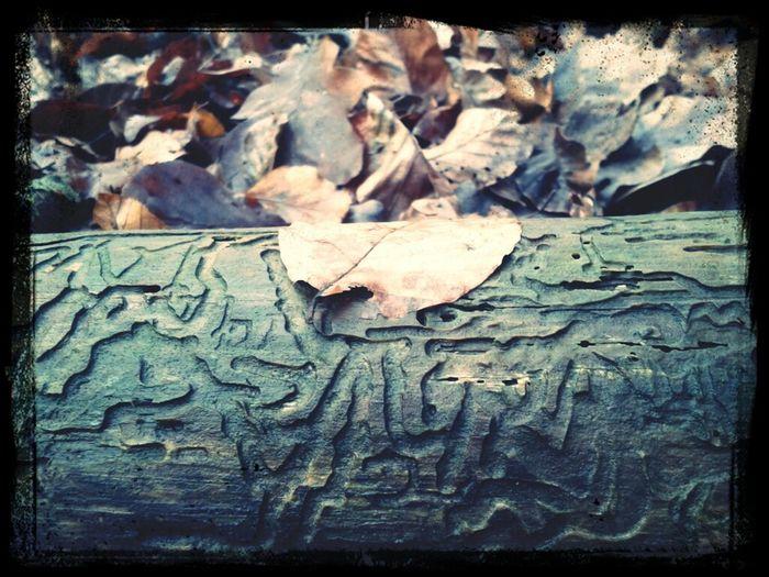 Wood Hiking Leaves Being Adventurous Exploring Woods