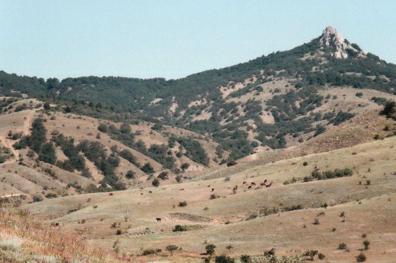 35mm 35mm Film Cows Crimea Film Geology Hill Horizon Over Land Idyllic Landscape Mju2 Mjuii Mountain Mountain Range Nature No People Olympus Outdoors Sky Travel Destinations Traveling