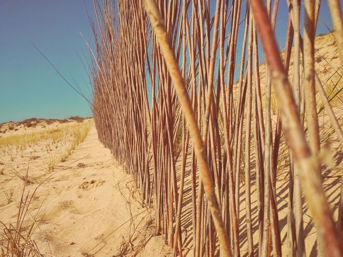 Wooden Fence On Sand At Beach Against Sky
