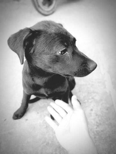 Pets Dog Collar Close-up Bulldog Puppy Pet Collar Boxer - Dog Pet Leash