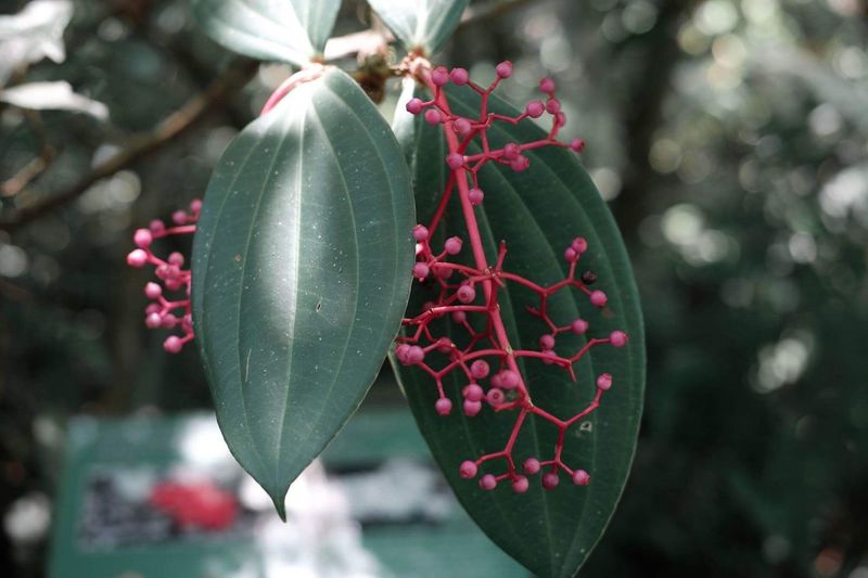 Close-up of red flower buds growing outdoors