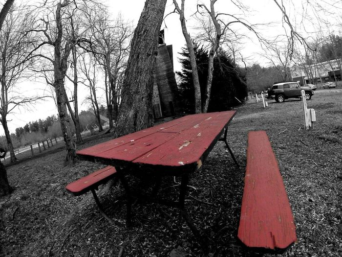 Table Picnic Red Blackandwhite Park Right Lane Must Turn Right Reality Black And White Blackandwhite Photography Dramatic Pineapple🍍 Outdoor Photography Tree Showcase March Q The Photojournalist - 2016 EyeEm Awards The Portraitist - 2016 EyeEm Awards
