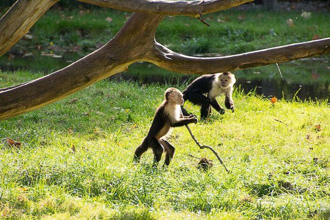 Serengeti-Park, Hodenhagen LVC White Taking Photos