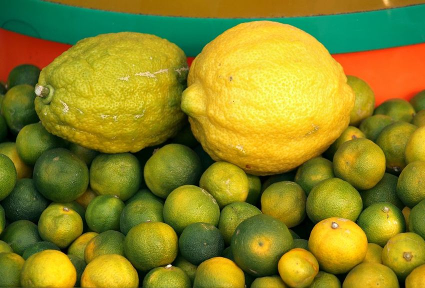 A pile of small limes and two large lemons Citrus Fruit Freshness Healthy Eating Juicy Fruit Lemon Limes Peel Rind Sour Taste Yellow Zest