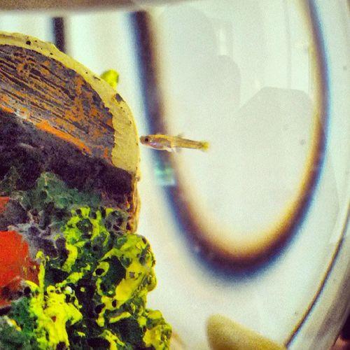 El pequeñuelo nuevo! Fish Aquarium Water Tresure