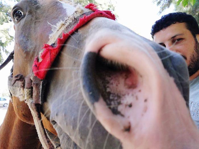 bakış Nature Horse At Atciftligi Dörtyol Men Young Women Portrait Close-up