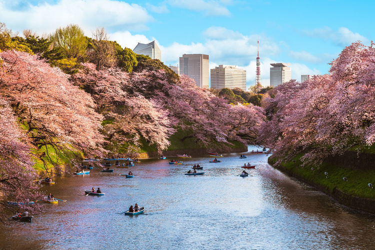 People boating in lake during cherry blossom