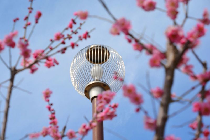 https://youtu.be/tgOLPzx97As Low Angle View Tree Plant Sky Nature Branch No People Springtime Flower Lighting Equipment Focus On Foreground Close-up Beauty In Nature Freshness Street Light Day Flowering Plant Blossom Growth Fragility