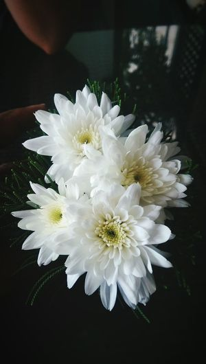 Good morning ^^ Hello World Morning Flowers Myhappiness💘 Mylife❤