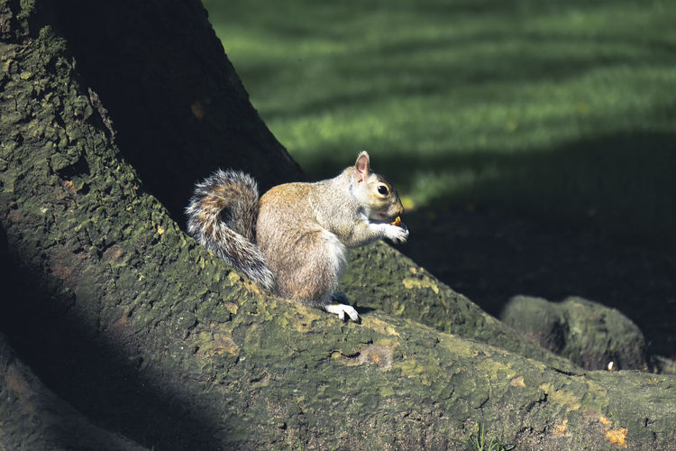 squirrel Animal Animal Wildlife Animals In The Wild Mammal Rodent Primate Vertebrate Nature Animal Themes
