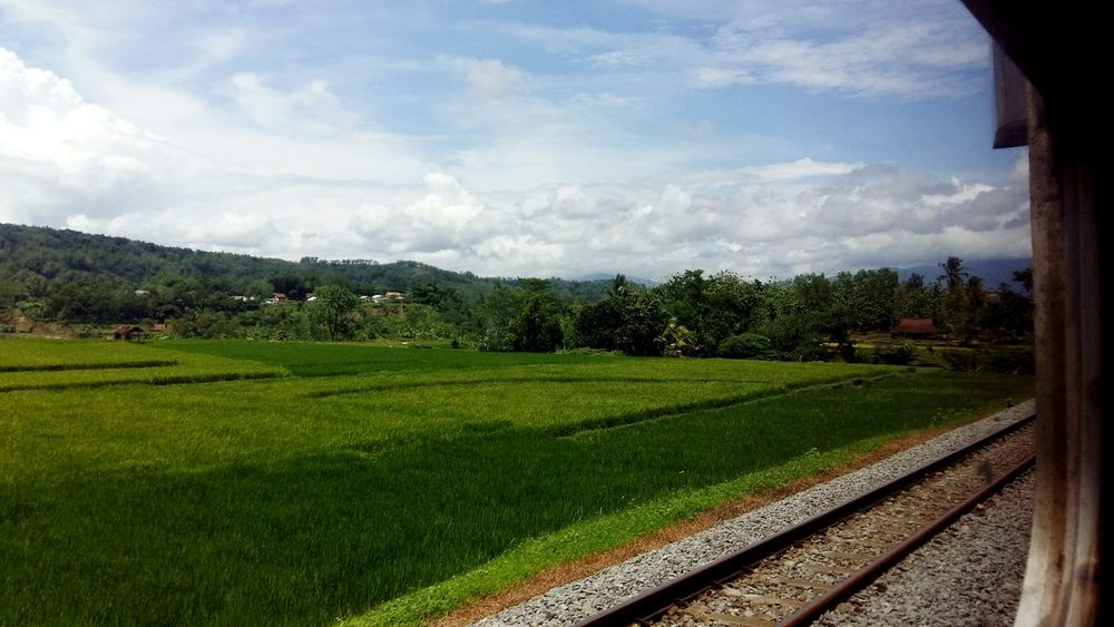 Beautiful scenery of Indonesia Jawatengah Beauty In Nature Cloud - Sky Agriculture Tree Rural Scene Nature Sky No People Day Growth Scenics Outdoors