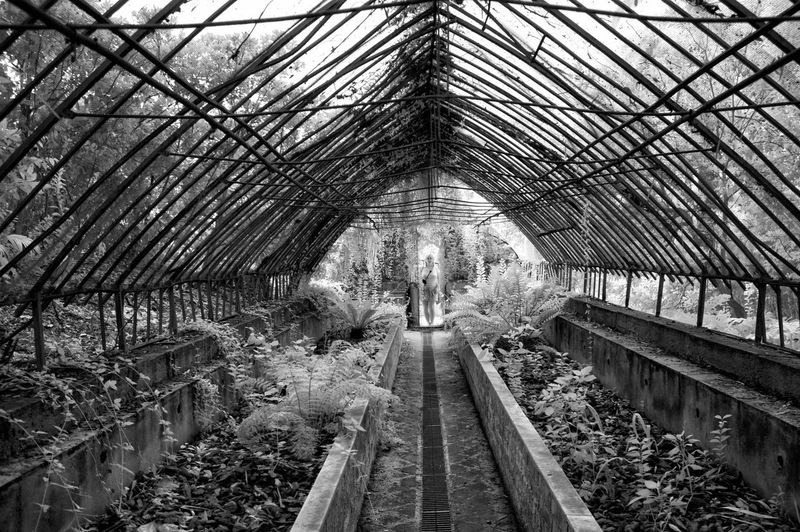 Abandoned Places Greenhouse Plantation Abandoned Greenhouse Architecture Built Structure Day Greenhouse Greenhouse Plants Lifestyles Misterious Mistery Mistery Atmosphere Mistery Place Plant Thriller Scene Thriller Scenic