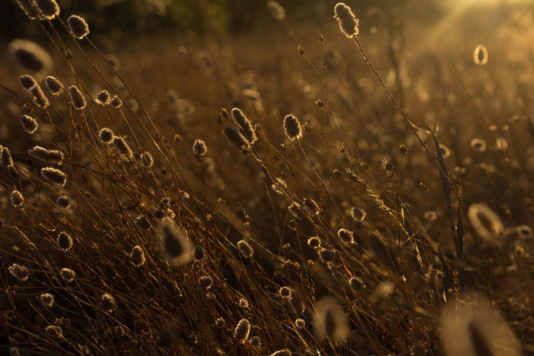 Full Frame Shot Of Water Drops On Field