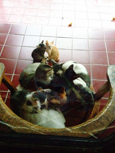 It's rainy,, stay dry and get warm. lets snuggle and cuddle up. Catlover Kiiten Kitty Meow