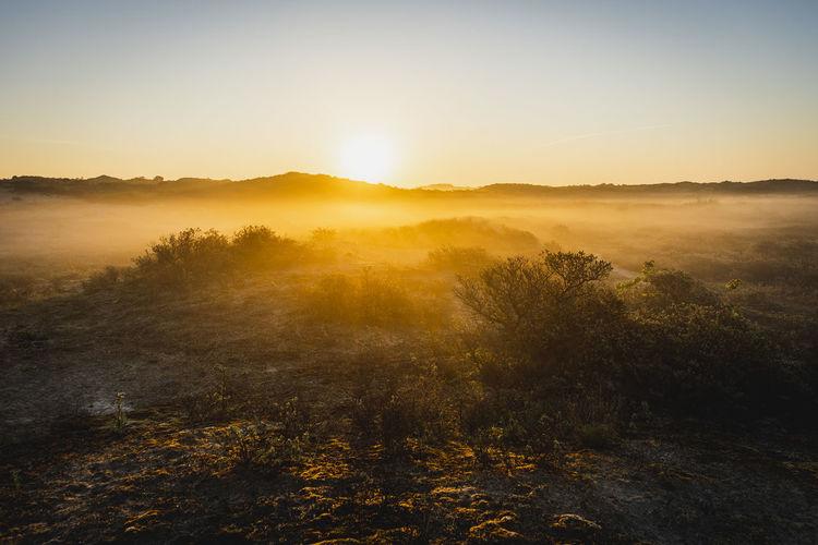 Dutch dunes during sunrise
