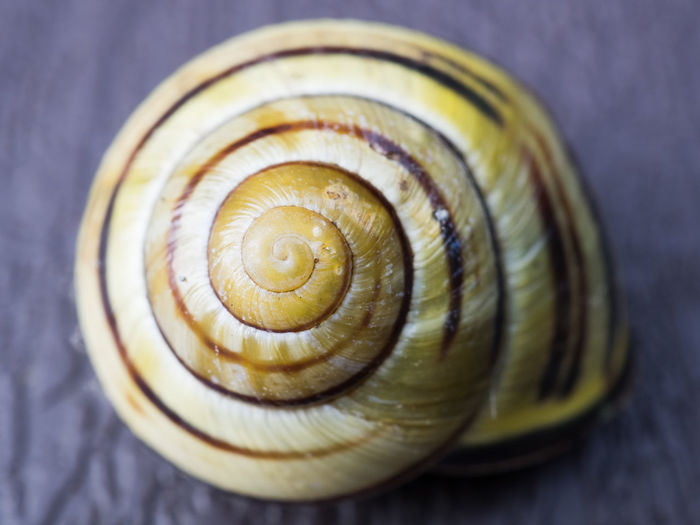 Snail shell Recursion Animal Shell Animal Themes Close-up Day Gastropod Nature No People Outdoors Snail Spiral
