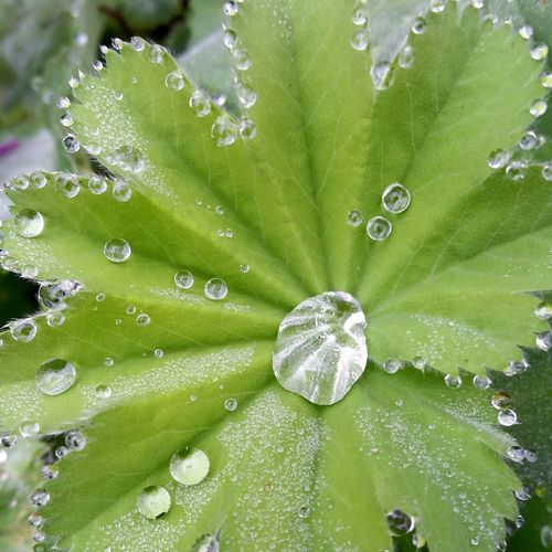 Leaf Green Color Water Close-up Plant Growth Leaf Vein Freshness Nature Botany Droplet Purity Beauty In Nature