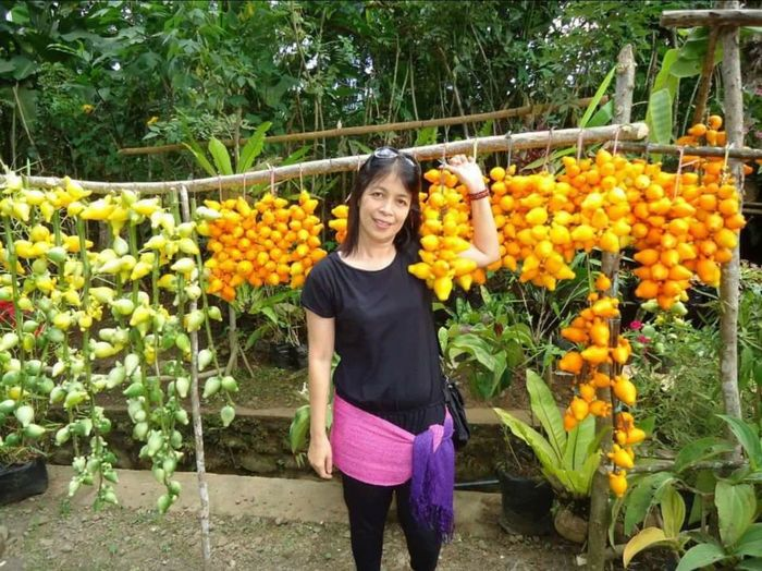 Only Women One Woman Only Flower Adults Only Smiling Adult Looking At Camera Portrait One Person Outdoors Day Women People Standing Happiness Front View Flowerbed Young Women Growth Cheerful When In Davao, Philippines Been There. Done That. Paint The Town Yellow