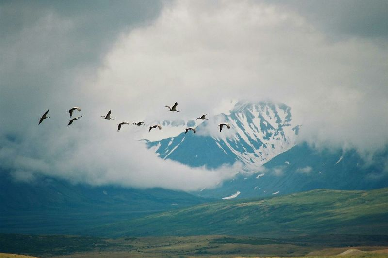 Birds Flying Against Altai Mountains During Winter