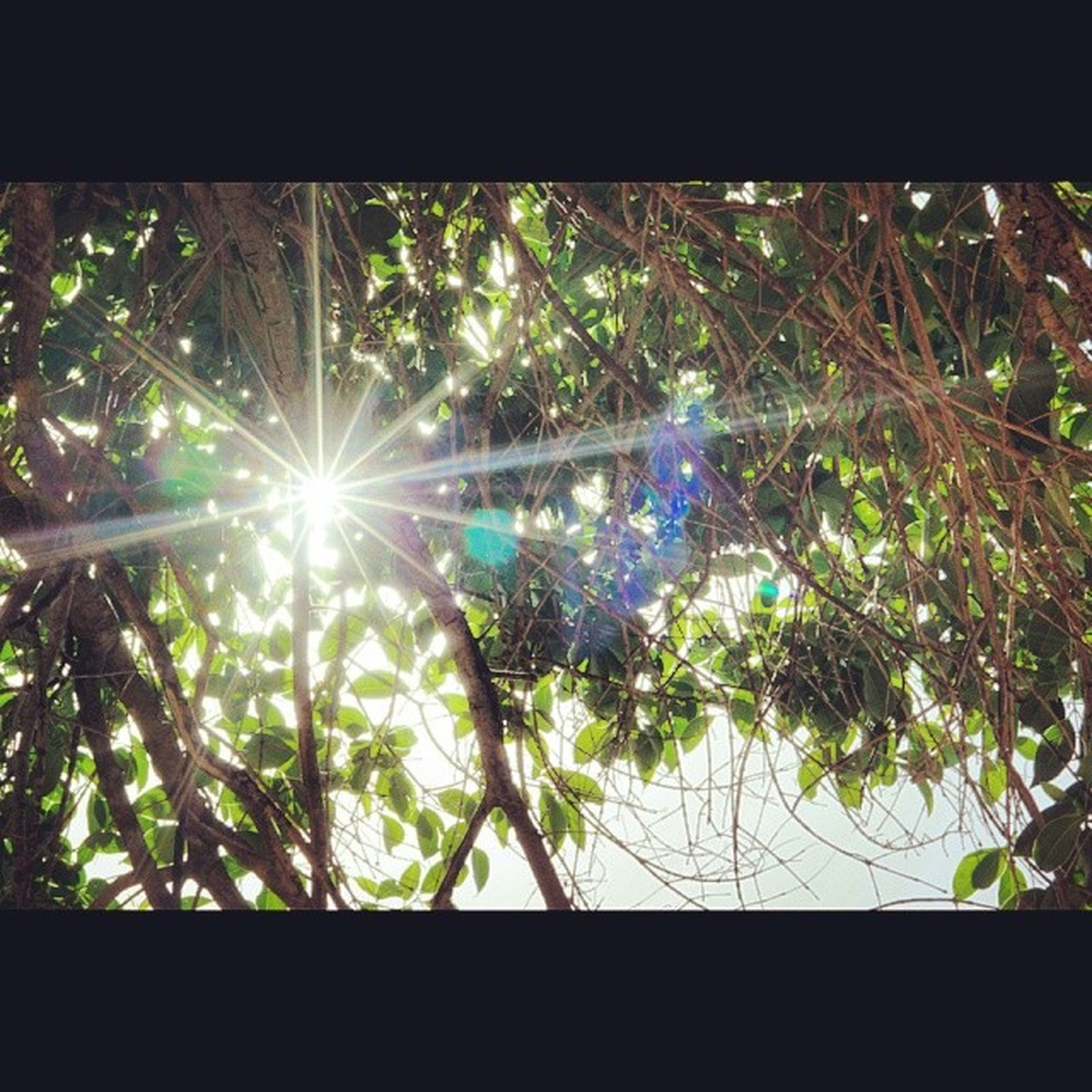 tree, growth, branch, sun, nature, sunlight, lens flare, low angle view, close-up, green color, plant, leaf, sunbeam, beauty in nature, day, no people, outdoors, tranquility, focus on foreground, auto post production filter